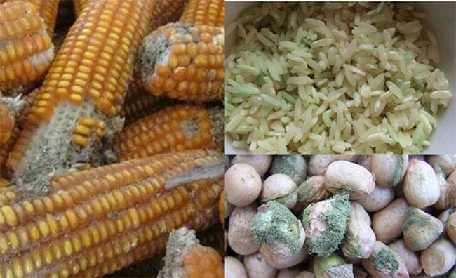 Sử dụng thực phẩm nấm mốc là một trong những nguyên nhân gây ung thư dạ dày