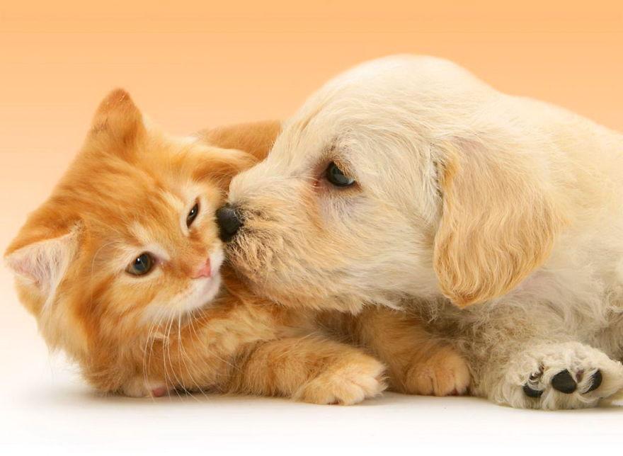 Kiểm tra sức khỏe cho thú cưng tại nhà với những cách đơn giản