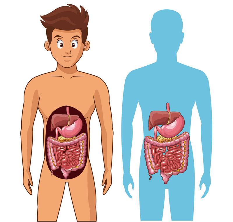 Tự kiểm tra sức khỏe bản thân – nhận biết sớm các vấn đề về hệ tiêu hóa